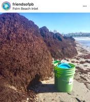 SeaweedPalmBeachInletIMG_2050-w500